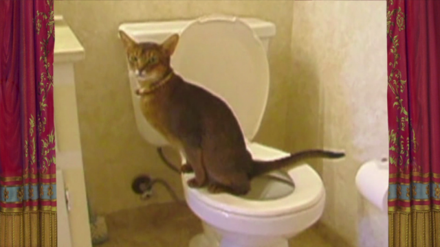 Found Footage Show: Toilet Training The Feline