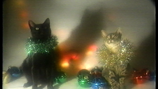 Oh Come All Ye Jingle Cats