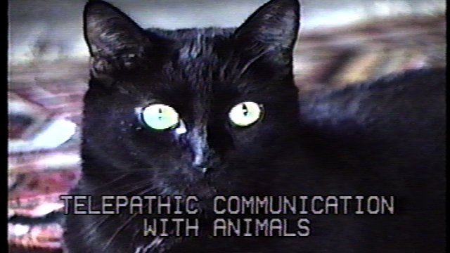 Telepathic Communication with Animals